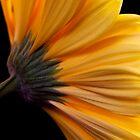 Yellow Gerber by Kat Meezan