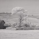 Old barn crop by Mark Jones
