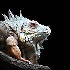Iguana by Mystic Raven 9