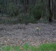 Winter Daffodils and Kudzu by Michael C. Fortner