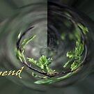 legend by NordicBlackbird