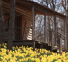 Daffodils in front of a cabin by Pignoodles