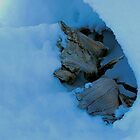 Driftwood in Snow by pictureit