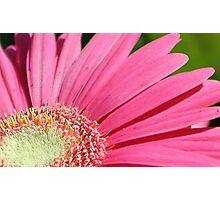 Hot Pink Flower Photographic Print