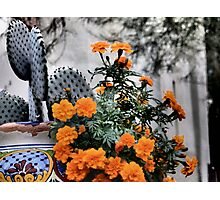 Old Town Flower Pot, Scottsdale Photographic Print