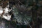 Spider's Web 2 by David Clarke
