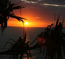 Sunrise through pandanus by three-wizards