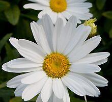 Flowers by juan jose Gabaldon