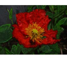Poppy in fractalius Photographic Print