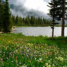 Diamond Lake Wildflowers by Robert Yone