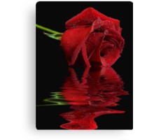 Radiant Rose Reflected Canvas Print