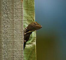 Curious Neighbor by Glen Terranova
