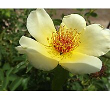 Flower Close-Up, Canyon Road, Santa Fe, New Mexico Photographic Print