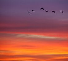 Flying off into the sunset by Travis Easton