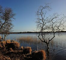 Studland - Little Tree,Big Lagoon. by delros