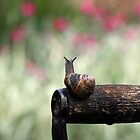 Garden Snail by naffarts