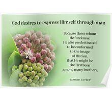 God's Plan ~ Romans 8:29 Poster