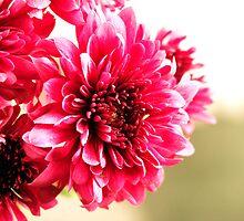 Flower by juan jose Gabaldon