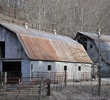 BARNS by Cathy Cale