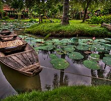 Vietnam Lotus Garden by Alistair Wilson