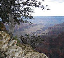 Dusk North Rim Grand Canyon by Bellavista2
