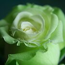 Green Rose by SKNickel