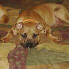 my dog Tank by VCorb0328