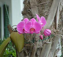 Orchid at Key West Truman Annex by qb4b88