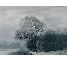 FOGGED TREE Photographic Print