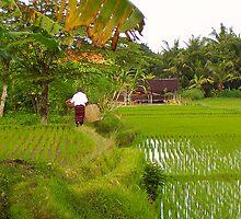 Balinese Rice Paddies ~ No 1 by IntrepidTravel