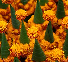 Marigolds by brettus