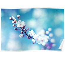 A taste of spring Poster