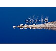 Salt Twigs Floating in an Island of Blue Photographic Print