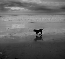 Beached Dog by jammysam1680
