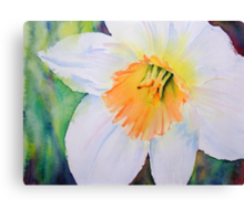 Narcissus Canvas Print
