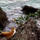 I sleep aloft over the ocean... And you? by Zeanana