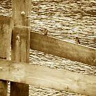 Glenlg River by thebeachdweller