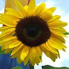 Sunflower by thebeachdweller