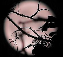 Silhoutte In The Moon Light by sternbergimages