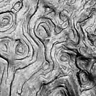 Bark Swirls by Jane McLean