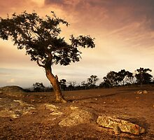 """Sunset Tree""Dog Rocks,Bateford,Geelong. by Darryl Fowler"
