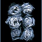 FADED ROSES 1 by Daniel Sorine