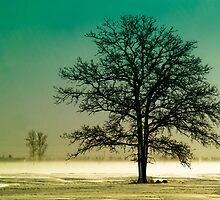 Tree on 20 mile road II by Theodore Black