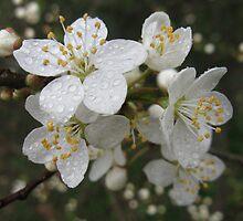 Spring rain by AnnaO