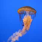 Jellyfish by Misty Lackey