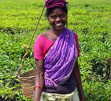 Tea garden picker, Manas, India by John Mitchell