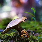 """I am... a mushroom; On whom the dew of heaven drops now and then."" by jerrydeese"