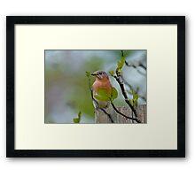 Dreaming of Bluebirds Framed Print