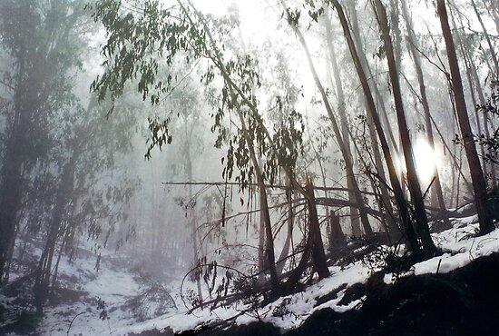 Misty Trees, Mount Buffalo by Roz McQuillan