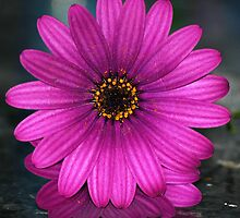 Perfectly Purple by Carol Barona